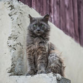 Dirty street cat sitting outdoors — Stock Photo