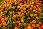 Bunch of fresh mandarin with leaves oranges on market — Foto de Stock