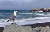 Seagull's View, Rockaway Beach, Pacifica California — Stock Photo