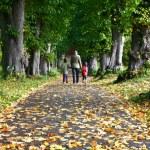 familjen promenad i skogen — Stockfoto