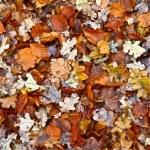 Autumn orange leaves — Stock Photo #18171831