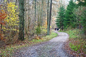Beautiful forest in autumn — Stock Photo