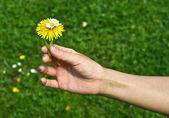 手给一朵花 — 图库照片