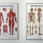 Постер, плакат: Chiropractise clinic