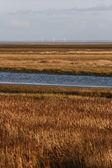 Landscape from Island of Fanoe in Denmark — Stock Photo