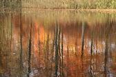Autumn forest reflexion — Stock Photo