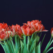 Red tulips in a vase — Stock Photo