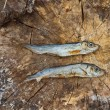 Two small dried fishes on wood — Stock Photo #39837489