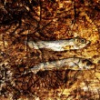 Two small dried fishes on wood — Stock Photo #39837609