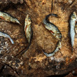Small dried fishes forming the word fish — Stock Photo #39838637