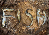 Small dried fishes forming the word fish — Stock Photo