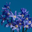 Delphinium flower shot against a blue sky — Stock Photo