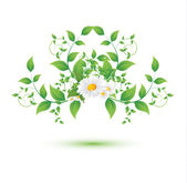 Chamomile flower and green leaves — Stock Vector