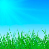 Nature background with green grass and blue sky — Stock Vector
