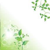 Oddział z świeżych zielonych liści — Wektor stockowy