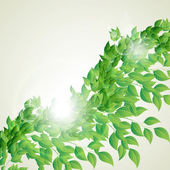 Branch with fresh green leaves — Stock Vector