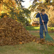 Stock Photo: Raking Leaves Teen Boy in Blue Sweatshirt