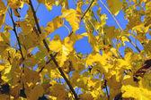 Färger hösten — Stockfoto