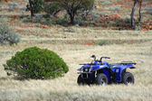 Gold bearing prospection in the Australian bush — Stock Photo