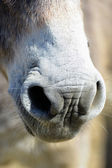 Donkeys in pre — Stock Photo