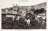Old postcard of Grasse, picking jasmine — Foto Stock