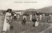 Old postcard of Riviera, picking tuberous — Stock Photo