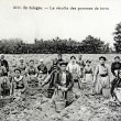 Old postcard In Sologne, harvesting potatoes — Foto Stock #37332249