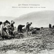 Old postcard In Vosges, harvesting potatoes — Stock Photo