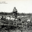 Old postcard in Landes, Shepherd on stilts spinning wool bea — 图库照片 #37332997