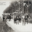 Old postcard in Landes, team of mules carrying pitprops — Foto Stock #37333063