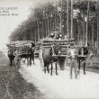 Old postcard in Landes, team of mules carrying pitprops — 图库照片 #37333063