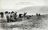 Old postcard In Vosges, harvesting potatoes — Stock fotografie