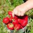 Child taking red ripe strawberry — Stock Photo #12806039