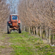 Tractor working in spring apple garden - Stock Photo