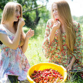 Strawberry pickers — Stock Photo