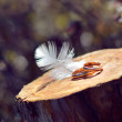 Two wedding rings on wooden surface with feather decoration closeup — Stock Photo