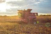 уборки кукурузы — Стоковое фото