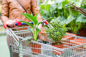 Two pot plants standing in a cart solding in a supermarket — Stock Photo