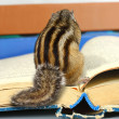 Funny chipmunk reading book — Stock Photo #12111359