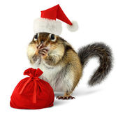 Chipmunk in red Santa Claus hat with Santas bag — Stock Photo