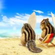 ������, ������: Chipmunks surfers on the beach with surf boards