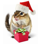 Chipmunk in red Santa Claus hat with gift box — Stock Photo