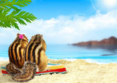 Chipmunks on the beach, honeymoon concept — Stock Photo