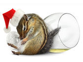Funny drunk chipmunk dress santa hat with champagne glass — Stock Photo