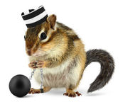 Funny criminal chipmunk in prison hat — Stock Photo