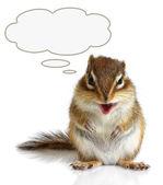 Funny talking animal — Stock Photo