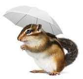 Funny animal with umbrella on white — Stock Photo