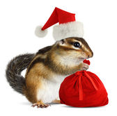 Chipmunk in red Santa Claus hat with Santas bag — Stock Photo