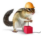 Funny chipmunk with detonator isolated on white — Stock Photo