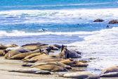 Leones machos jóvenes abrazos del mar en la playa de arena relajarse — Foto de Stock